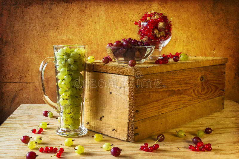 Gooseberry red currant fruits vintage royalty free stock images