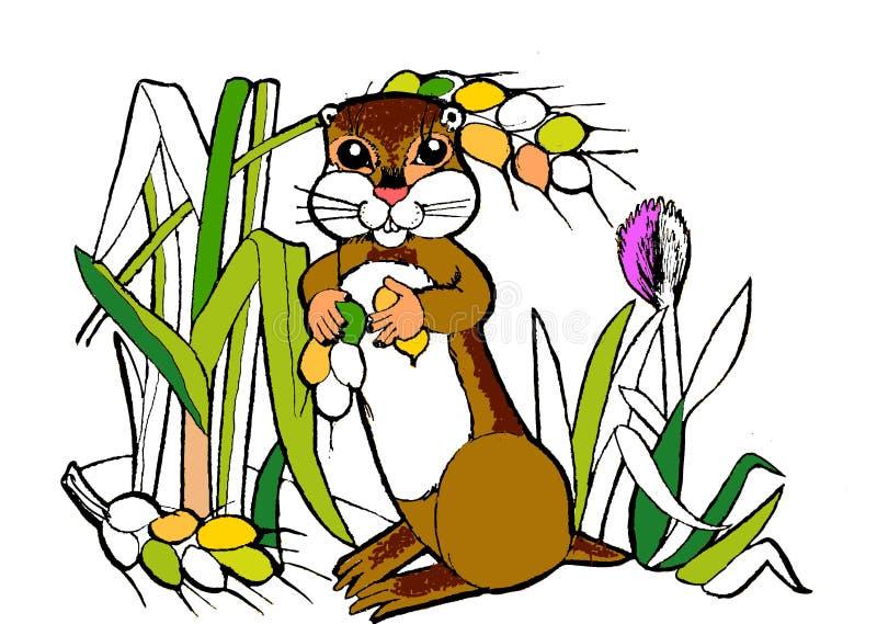 Gopher, animais engraçados dos desenhos animados, livro para colorir fotos de stock royalty free