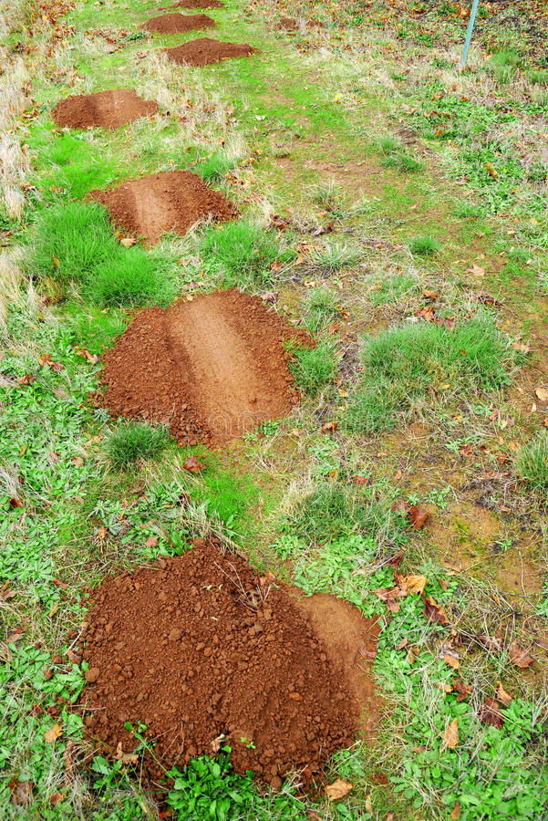 Free Gopher Mole Mounds Stock Images - 11715204