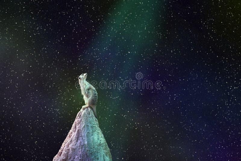 Gopher-Tier, das auf die Hügelblicke am Nacht-sta sitzt lizenzfreie stockfotografie