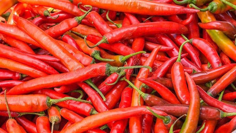 gorąca czerwone chili zdjęcia stock