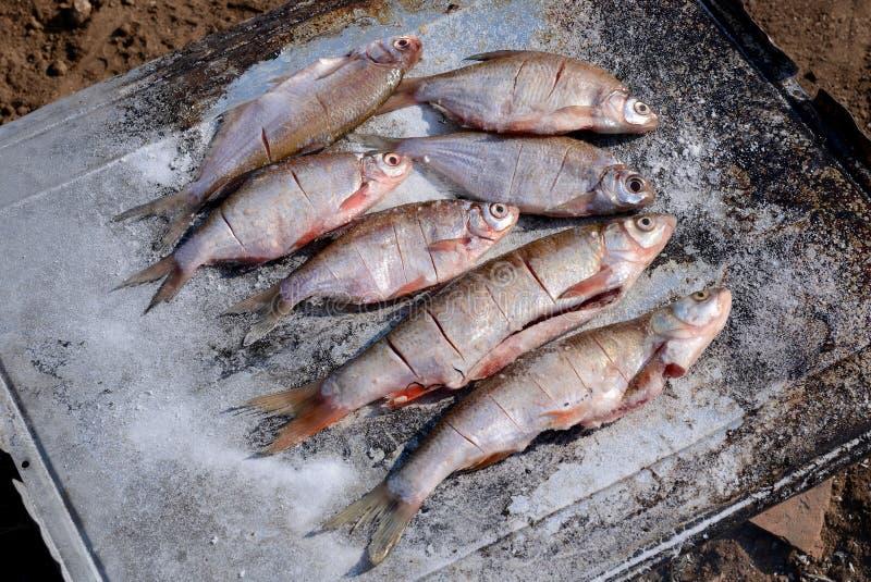 Gorąca ryba na opieczenie niecce Wrzesień 2, 2016 fotografia stock