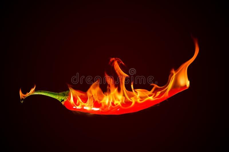 Gorący chili pieprz na czarnym tle z płomieniem ilustracji