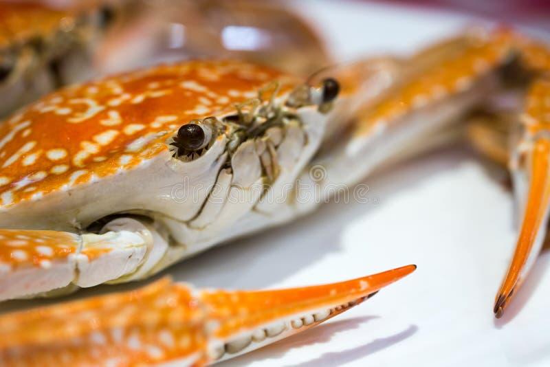 Gorący Odparowani kraby zdjęcie royalty free