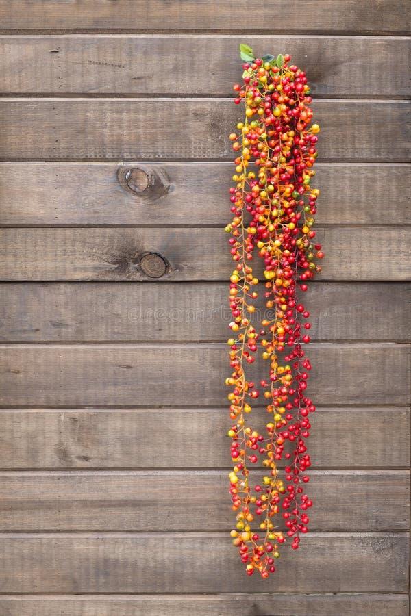 Gorący pieprz, Czerwonego pieprzu obwieszenie na drewnianej ścianie fotografia royalty free