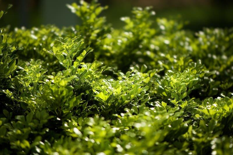 Gorący zielony ranek w Vung Tau Wietnam zdjęcia stock