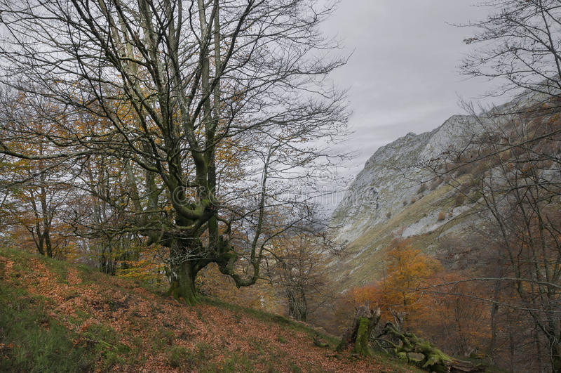 Gorbeia自然公园在秋天 免版税库存照片