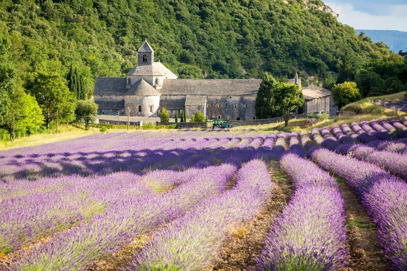Abbaye de Sénanque, Provence, France royalty free stock photo