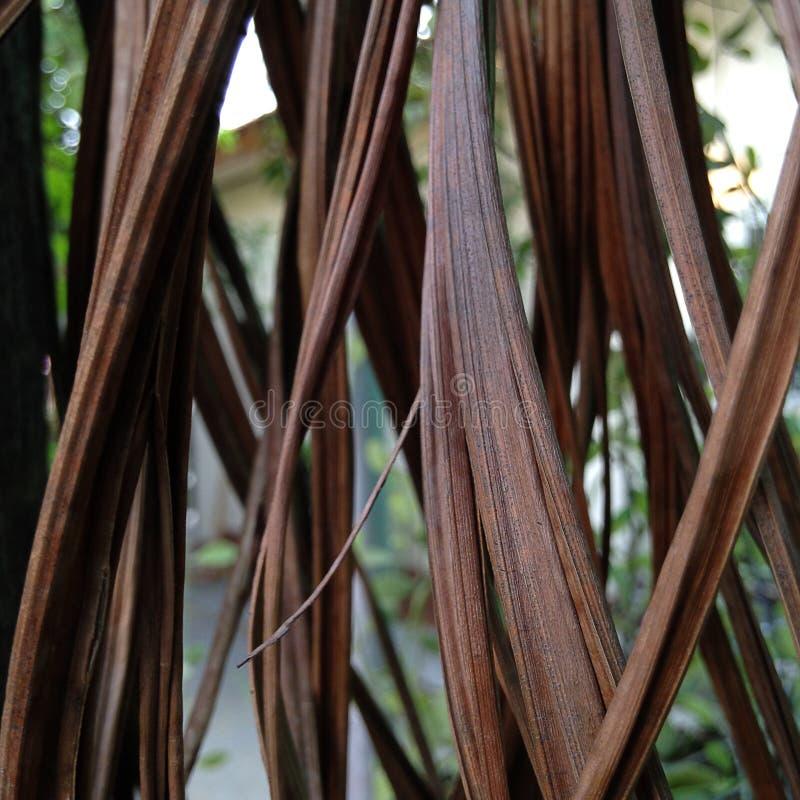 Gordijn natuurlijk, droog areca blad royalty-vrije stock afbeelding