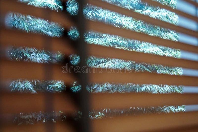 Gordijn van de onduidelijk beeld de het houten blinde schaduw en achtergrond van de schaduwboom royalty-vrije stock foto