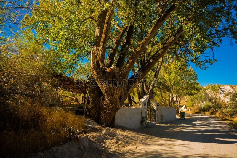 Goreme-Region, Cappadocia, Anatolien, die Türkei: Die Straße führt zu die Felsen, nahe dem Baum und dem Zaun im Sommer im sonnige lizenzfreie stockfotografie