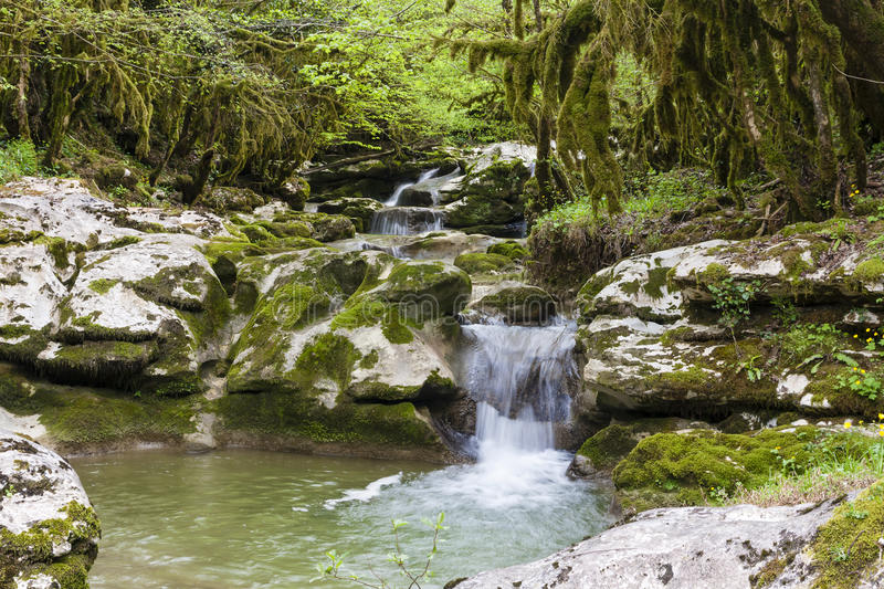 Gorge in Abkhazia stock photo