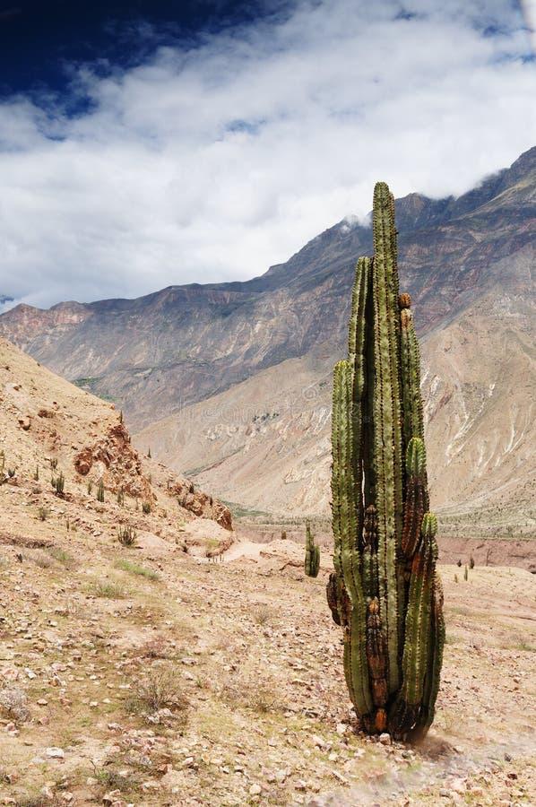 Gorge Cotahuasi, Pérou photo stock