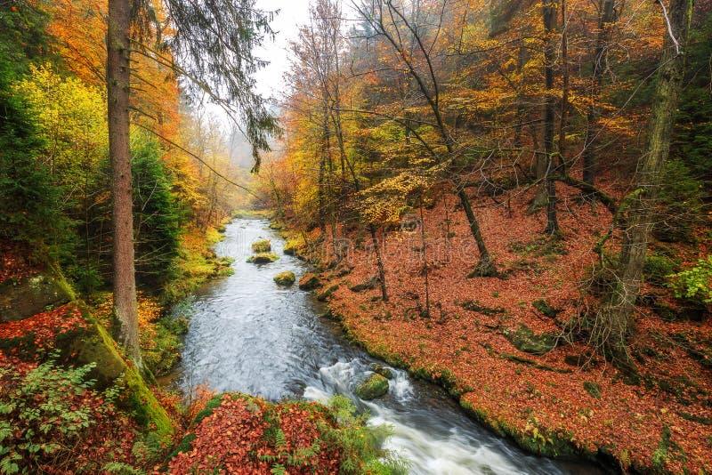 Gorge de Kamnitz en parc national de Saxon Suisse photographie stock libre de droits