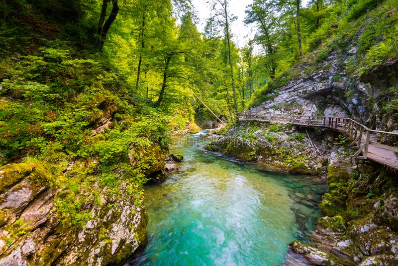 Gorge de Vintgar, Slovénie Rivière près du lac saigné avec les chemins de touristes en bois, les ponts au-dessus de la rivière et photographie stock