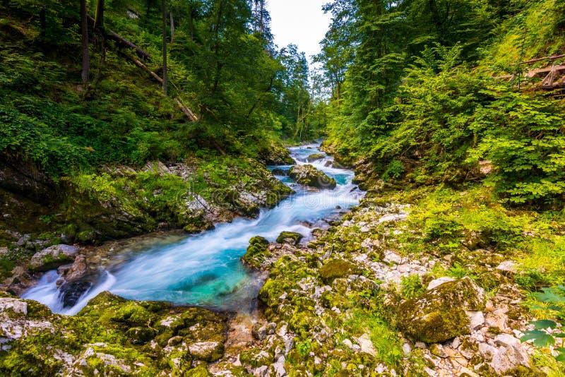 Gorge de Vintgar, Slovénie Rivière près du lac saigné avec les chemins de touristes en bois, les ponts au-dessus de la rivière et photos stock