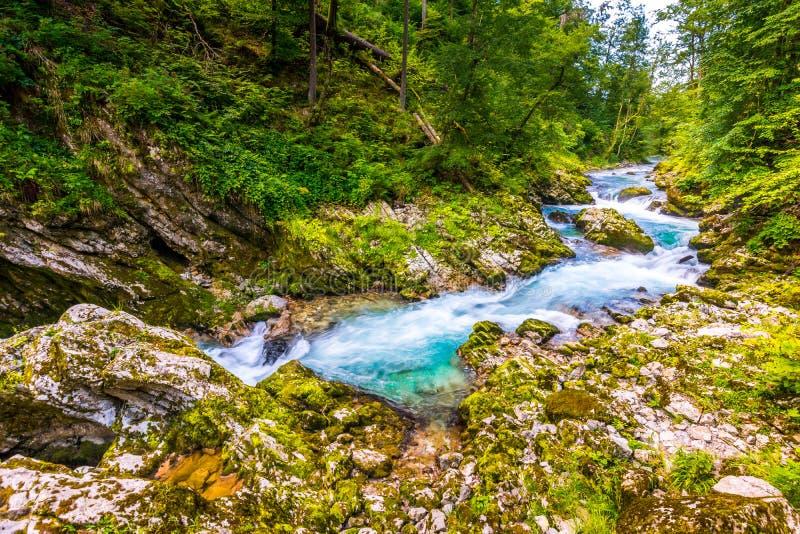Gorge de Vintgar, Slovénie Rivière près du lac saigné avec les chemins de touristes en bois, les ponts au-dessus de la rivière et photographie stock libre de droits