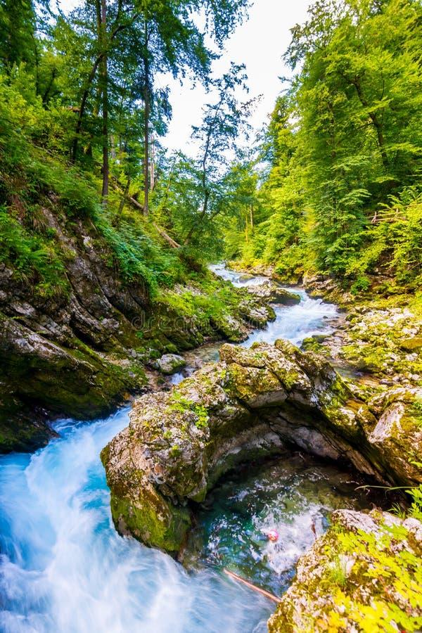 Gorge de Vintgar, Slovénie Rivière près du lac saigné avec les chemins de touristes en bois, les ponts au-dessus de la rivière et photo libre de droits