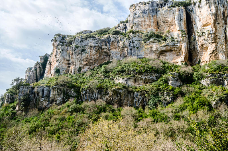 The gorge of Lumbier. Colonies of griffon vultures flying over the cliffs, sheer rock faces where birds nest, a river with clean and fresh water that cuts royalty free stock photos