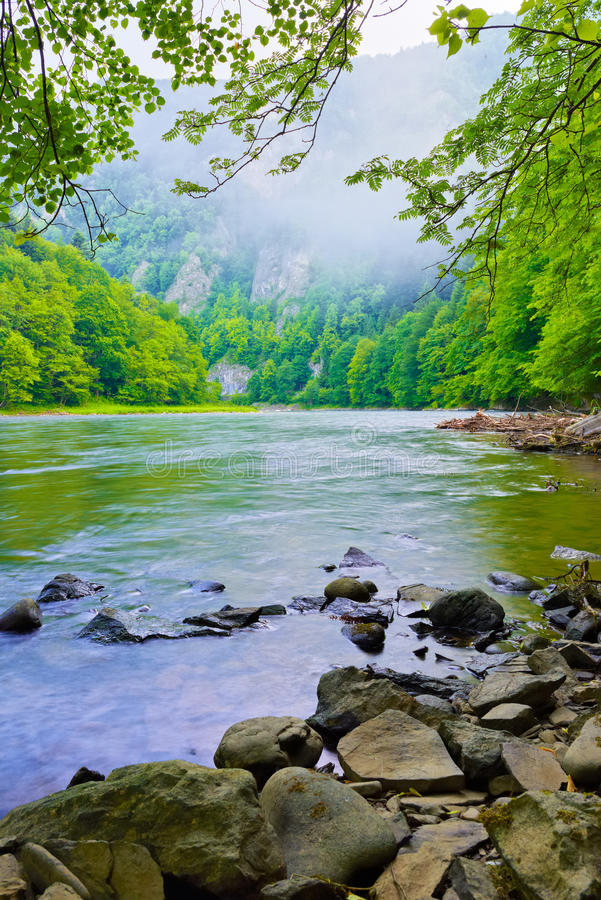 The gorge of mountain river in the morning. Dunajec, Pieniny royalty free stock photo