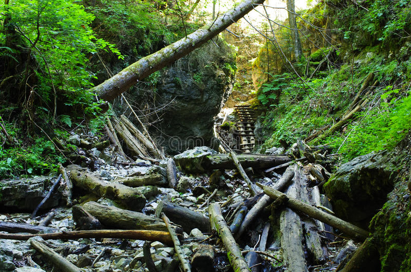 Gorge of Slovak Paradise. Path deep in the gorge of Slovak Paradise royalty free stock photography
