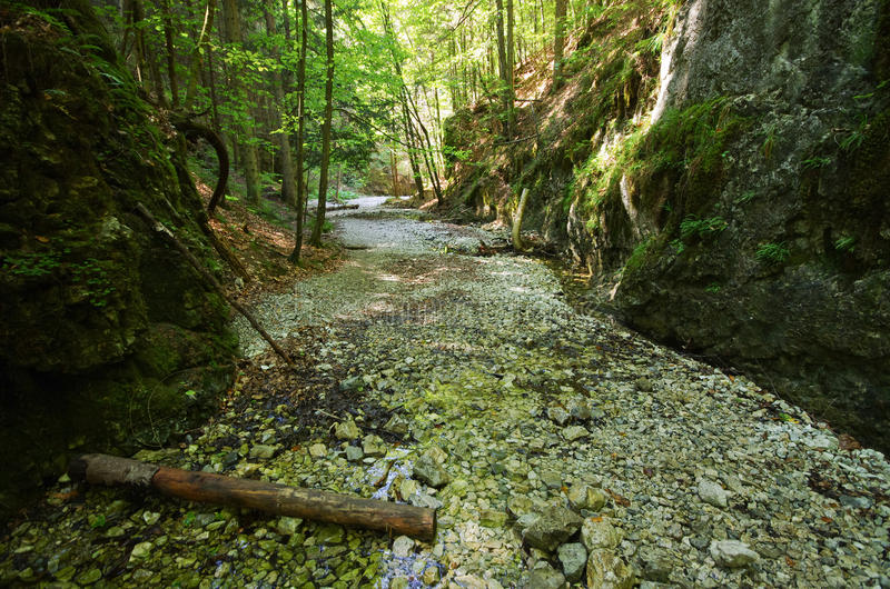 Gorge of Slovak Paradise. Path deep in the gorge of Slovak Paradise royalty free stock photo