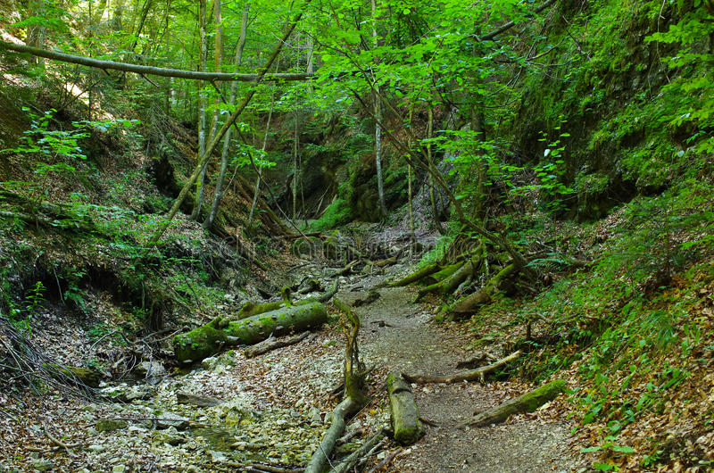Gorge of Slovak Paradise. Path deep in the gorge of Slovak Paradise royalty free stock images