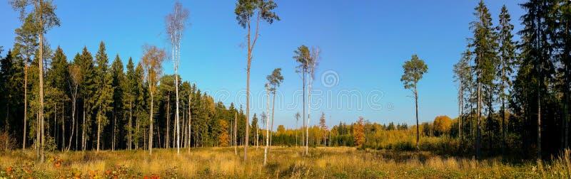 Gorgeous autumn landscape panorama royalty free stock photography