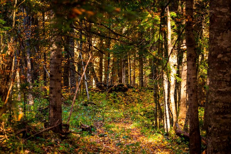 Gorgeous autumn landscape panorama of a scenic forest royalty free stock photography