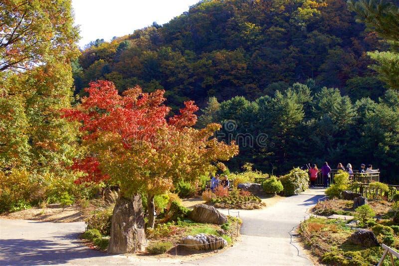 The garden of Morning calm, Seoul, South Korea. Gorgeous autumn scenery of the garden of Morning Calm, Seoul, South Korea stock photography