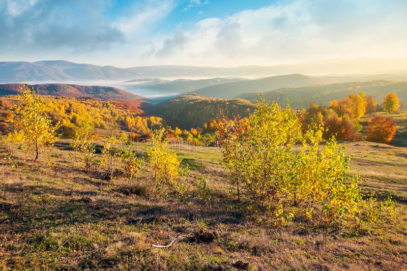 Gorgeous autumn sunrise. Forest on hill in fall color, fog in valley and beautiful sky over the distant mountain. sunny and warm november morning stock image