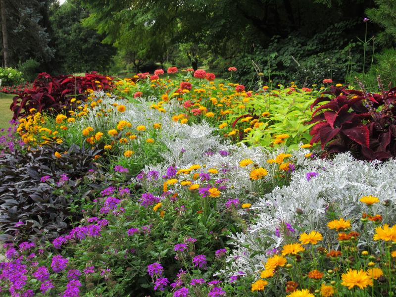 Gorgeous Bright Colorful Mixed Flower Bed At Stanley Park Perennial Garden, British Columbia. Gorgeous Bright Colourful Mixed Flower Bed At Stanley Park stock image