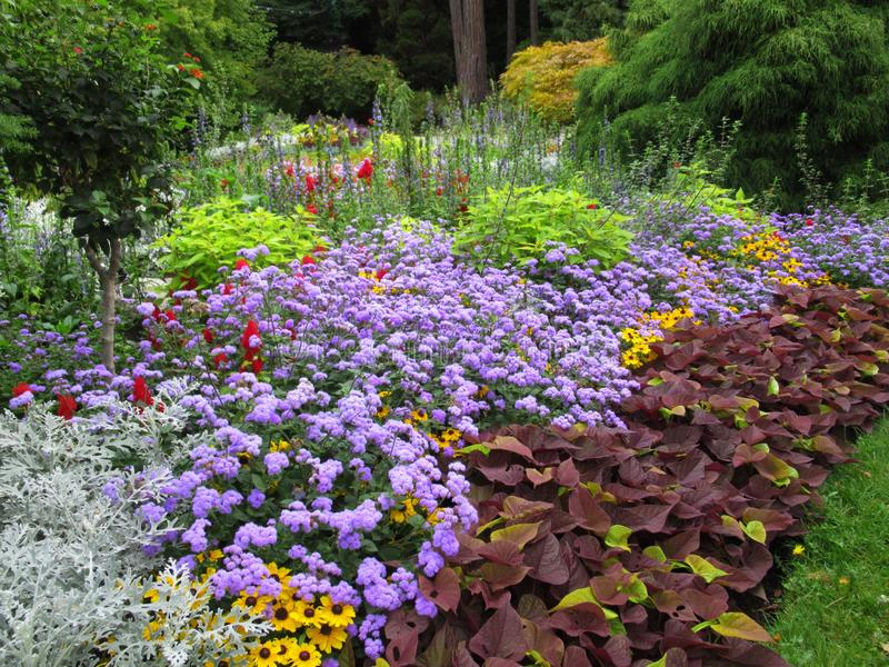 Gorgeous Bright Colorful Mixed Flower Bed At Stanley Park Perennial Garden, British Columbia. Gorgeous Bright Colourful Mixed Flower Bed At Stanley Park stock images