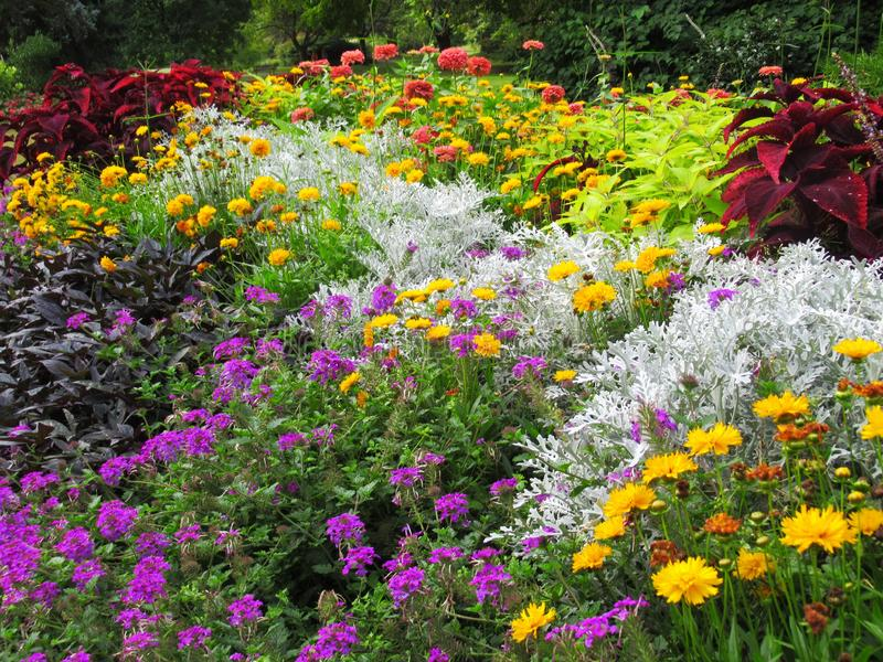 Gorgeous Bright Colorful Mixed Flower Bed At Stanley Park Perennial Garden, British Columbia. Gorgeous Bright Colourful Mixed Flower Bed At Stanley Park stock photo
