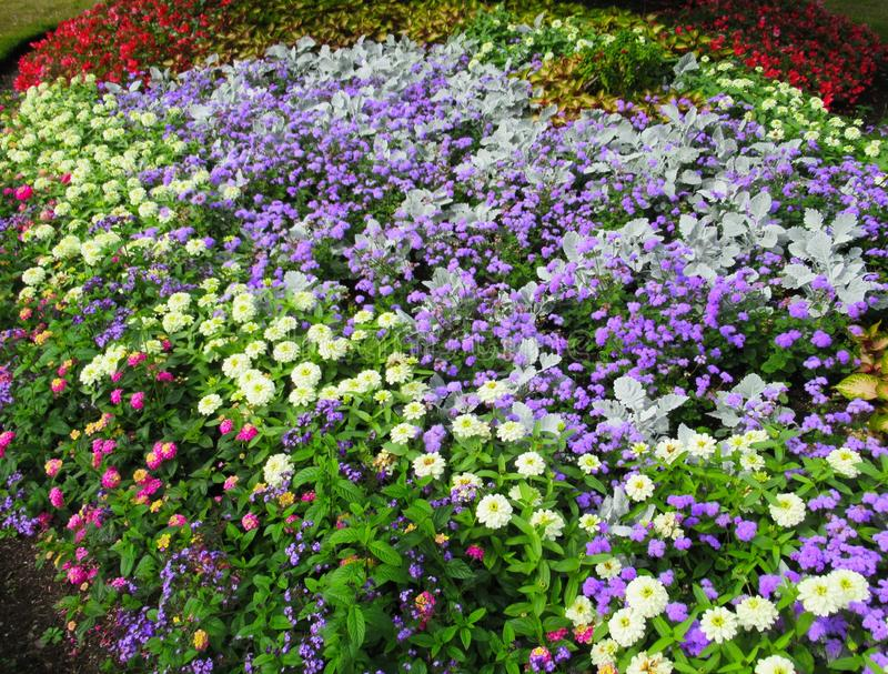 Gorgeous Bright Colorful Mixed Flower Bed At Stanley Park Perennial Garden, British Columbia. Gorgeous Bright Colourful Mixed Flower Bed At Stanley Park stock photography