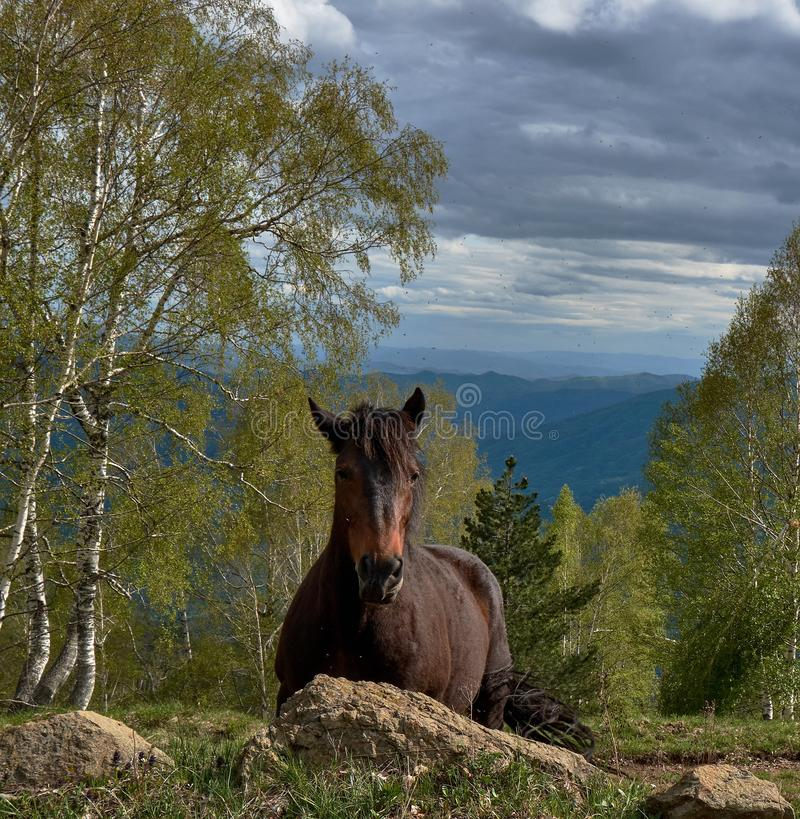 Gorgeous brown horse proudly standing in the mountains under the dark cloudy sky. A gorgeous brown horse proudly standing in the mountains under the dark cloudy royalty free stock photos