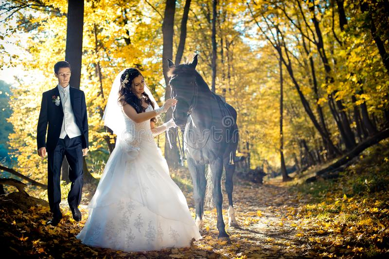 The gorgeous brunette bride is tenderly petting black horse in the sunlits at the blurred background of the groom. The stock photography