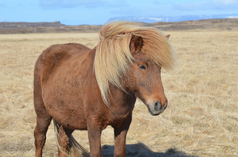 Gorgeous Chestnut Horse with a Blonde Mane stock photos