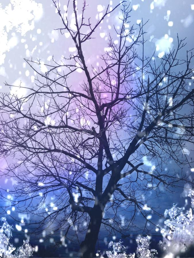 Gorgeous colorful tree royalty free stock image