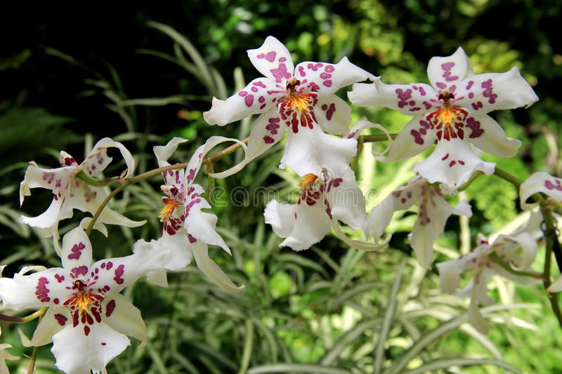 Gorgeous exotic orchids in woodsy corner of garden. Beautiful image of colorful exotic orchids in woodsy corner of tropical garden royalty free stock image