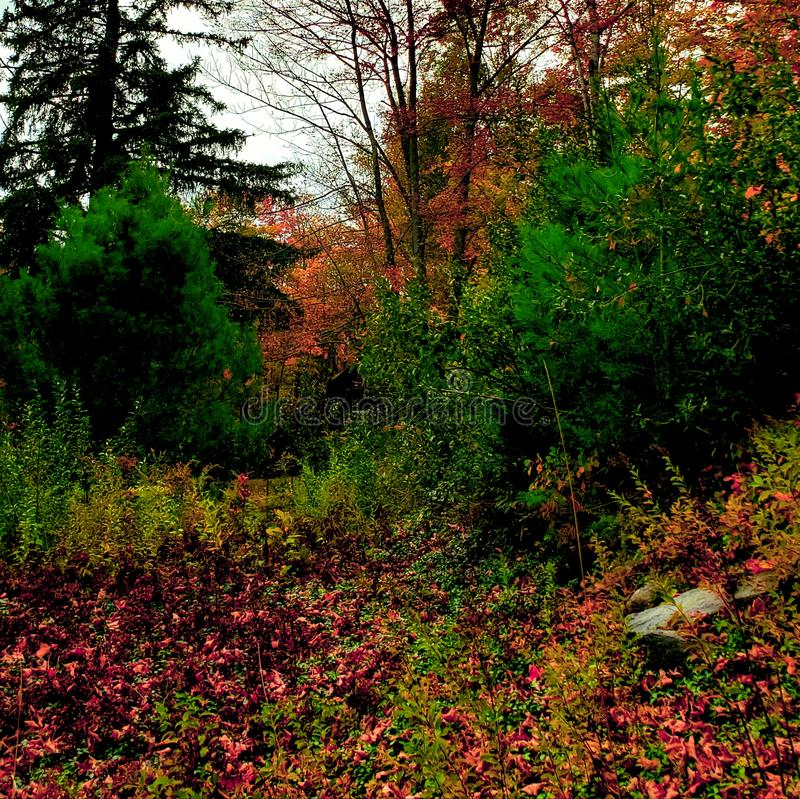 Gorgeous fall background royalty free stock images