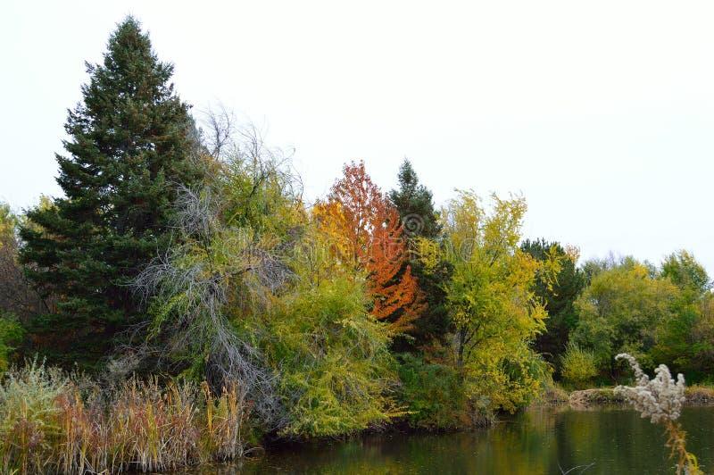 Download Fall Foliage Boise Idaho Albertson Park Stock Image - Image of boise, hawks: 103639557