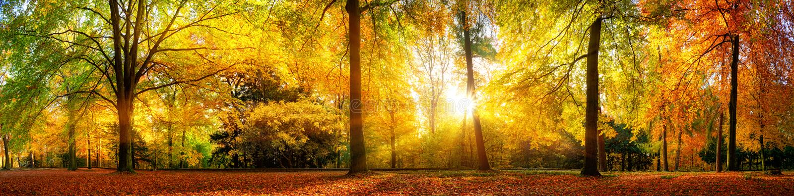 Gorgeous forest panorama in autumn stock photography