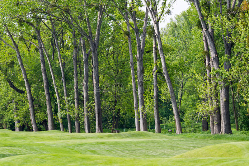 Download Gorgeous golf green stock image. Image of woodland, path - 19927083