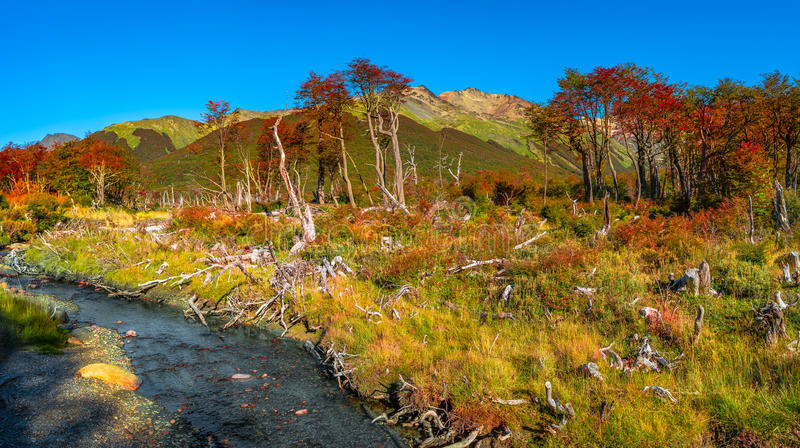 Gorgeous landscape of Patagonia& x27;s Tierra del Fuego National Park stock photography