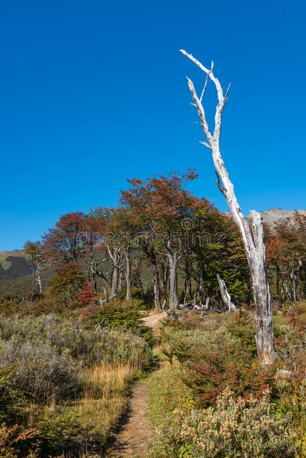 Gorgeous landscape of Patagonia`s Tierra del Fuego National Park stock photo