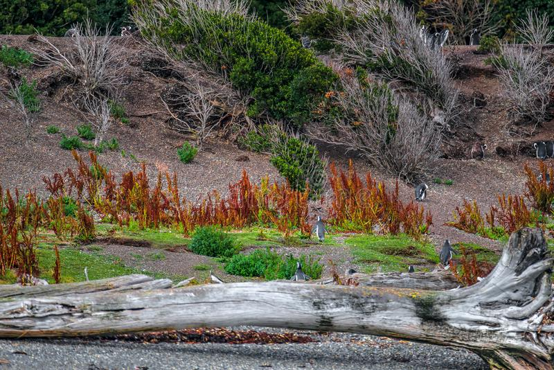 Gorgeous landscape of Patagonia`s Tierra del Fuego National Park royalty free stock photography