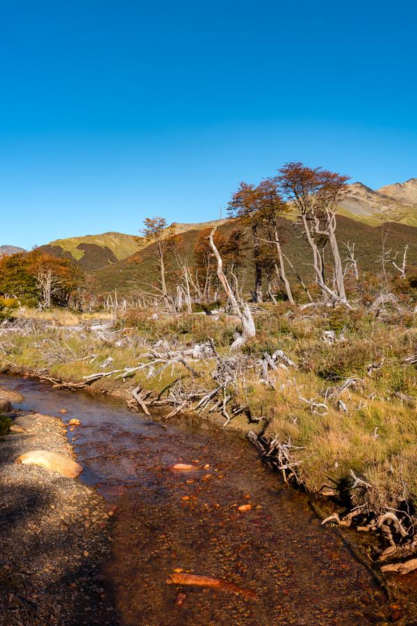 Gorgeous landscape of Patagonia`s Tierra del Fuego National Park stock images