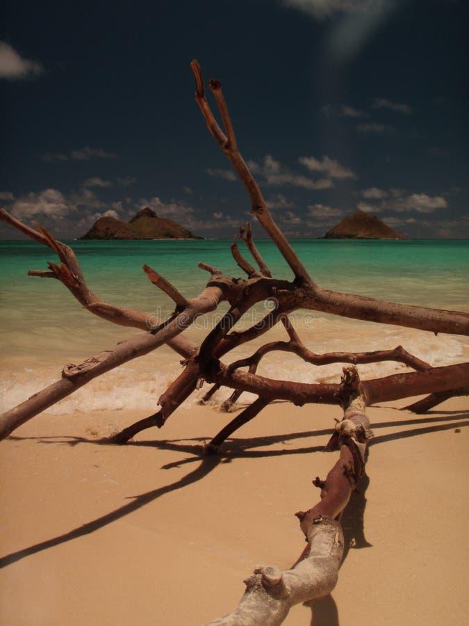 Download Gorgeous Lanikai Beach Hawaii Royalty Free Stock Image - Image: 13192886