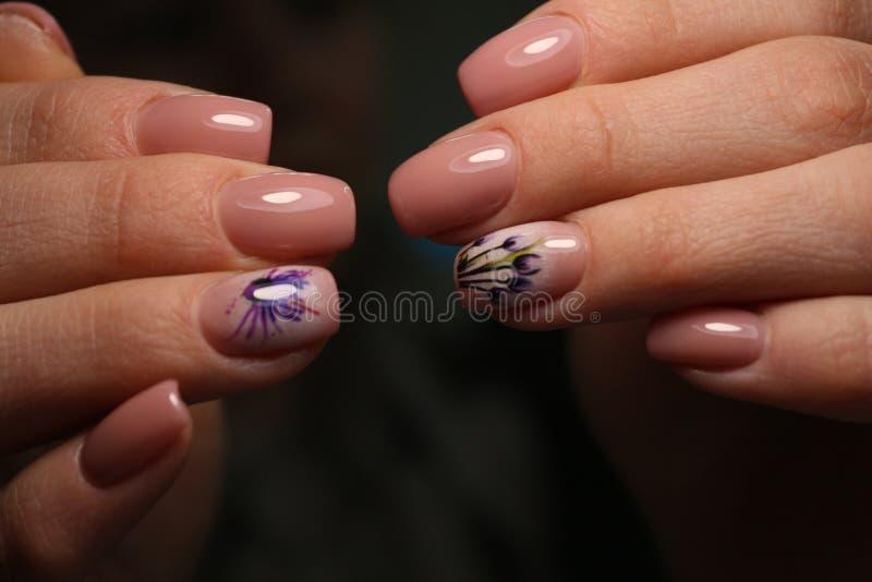 Gorgeous manicure, dark purple tender color nail polish, closeup photo stock photos